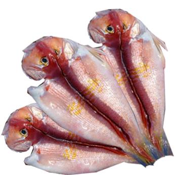 [제주산]옥돔1호(왕특대)(약3kg 6~10미)